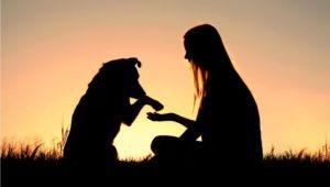 dog-human-bond