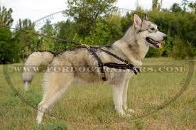 pull-harness