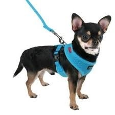 small-dog-harness