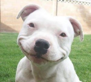 doggy-smile