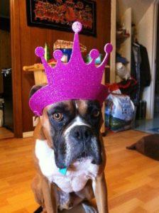 king-harley