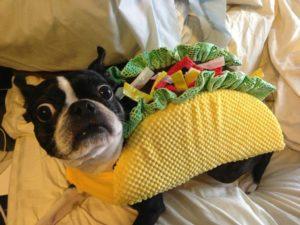 taco-dog